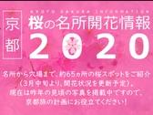 京都 桜の名所開花情報2020