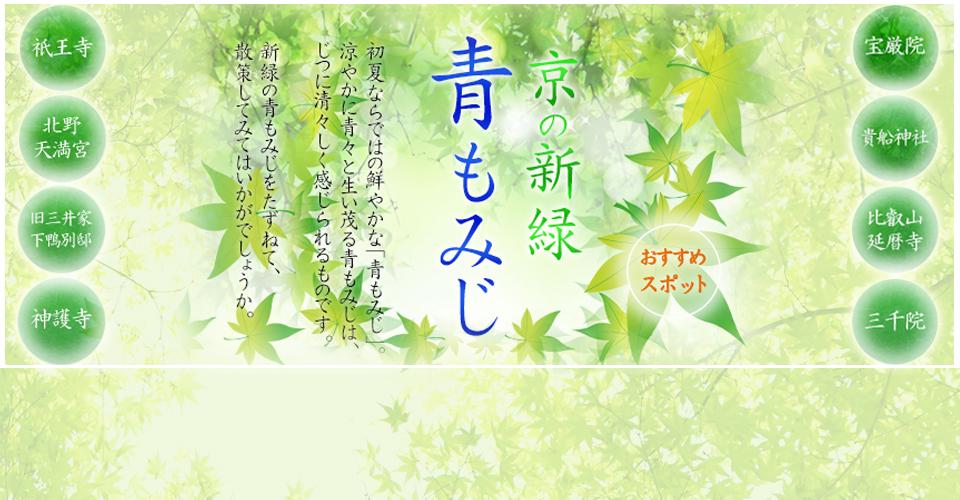 京の新緑 青もみじ