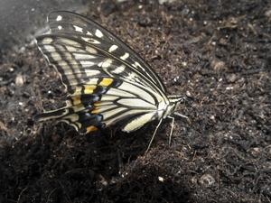 蝶を横から