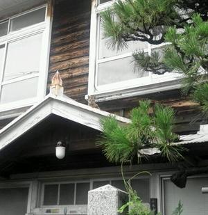 屋根の上に猫が
