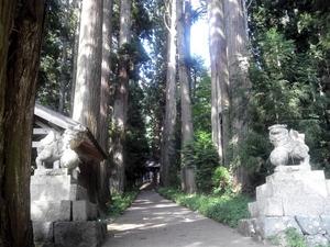 千年杉の神社