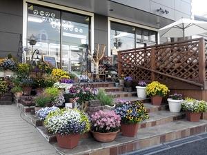 5月8日店先の花