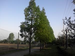 散歩道 木の間