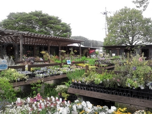 風雅舎、花の広場