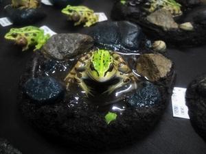 カエル工房のカエル