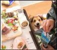 愛犬同伴専門『わんこ家 竹亭』